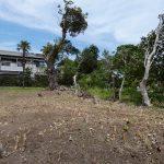 樹齢100年超の大楠の木付、売り土地96坪